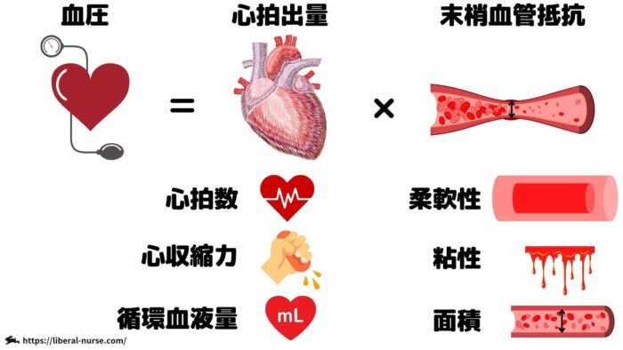 血圧規定因子