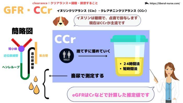 GFR・CCr・クレアチニンクリアランス
