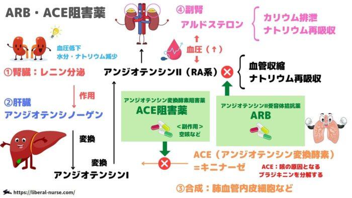 レニンアンジオテンシンアルドステロン・ARB・ACE阻害薬について