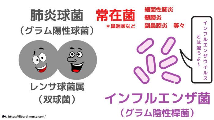 肺炎球菌・インフルエンザ菌・汎用