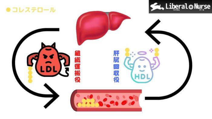 HDL・LDLコレステロールとは