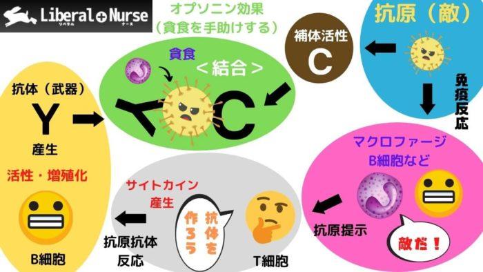 抗原抗体反応について