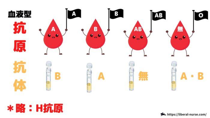 血液型抗原・抗体