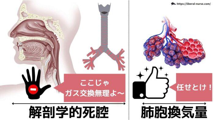 解剖学的死腔とは