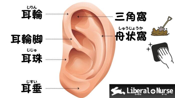 耳の解剖について