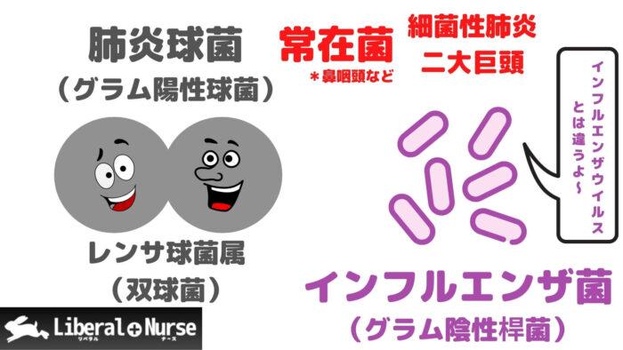 肺炎球菌・インフルエンザ菌