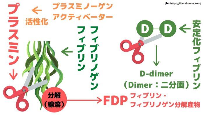 D-D・FDP