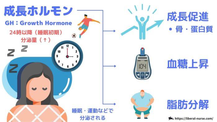 成長ホルモン・作用